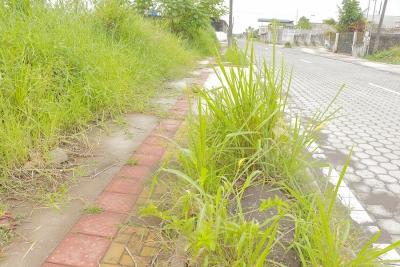 Ciudadanos descuidan jardineras