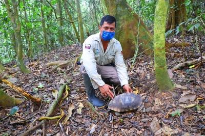 Tortugas son liberadas en reserva Yasuní
