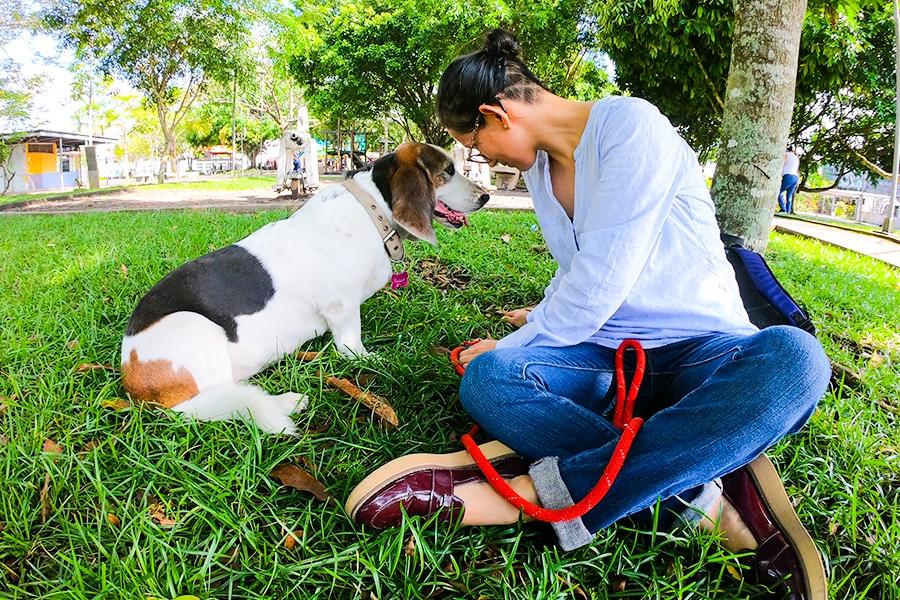 Municipio apoya campaña de esterilización en mascotas