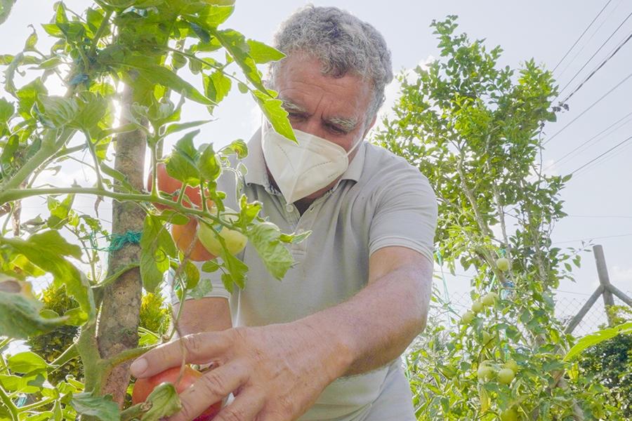 Primera cosecha de Huertos Orgánicos Urbanos